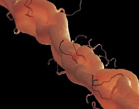 axon with dendrites 3D model