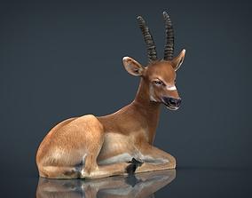 African Antelope 3D asset
