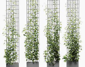 4 models of ivy on a wire rack in a planter
