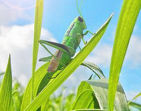 3D rigged bug Grasshopper