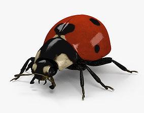 3D Ladybird HD