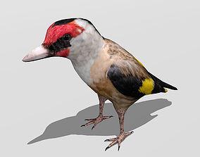 Goldfinch 3D model