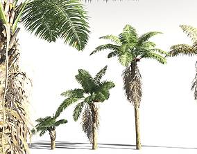 3D EVERYPlant African Oil Palm 10 -- 10 Models