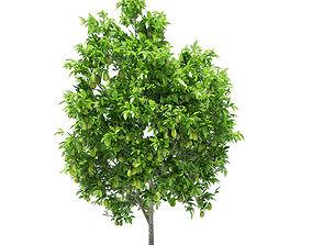 3D Avocado Tree with Fruits