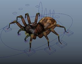 Spider Rigged 3D asset