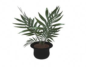 Plant in a pot 3D model game-ready