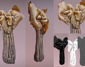 Helvella crispa - white saddle mushroom lowpoly realtime 1