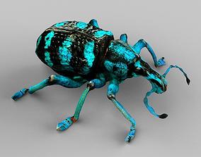 Eupholus Quinitaenia Beetle 3D asset