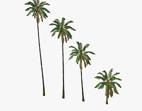 3D model Coconut palm tree 01 - Low Poly