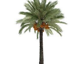 Phoenix Dactylifera Palm Tree 3D