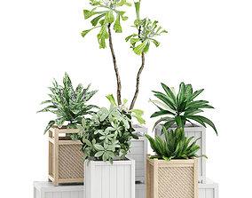 Potted plants 117 3D model