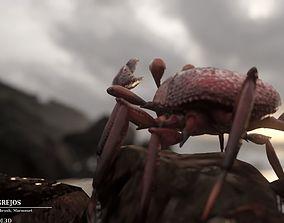 Rigid Crab 3D asset