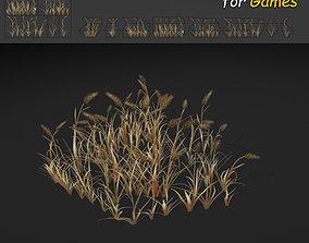 3D asset Dry WheatGrass Texture