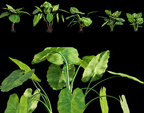 3D Alocasia macrorrhiza - Elephant Ears