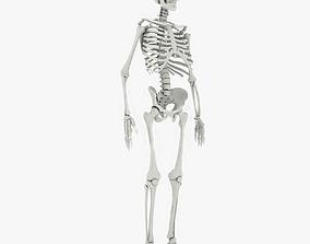 Skeleton 3D Models   CGTrader