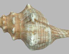 3D model Single seashell photoscan 01