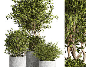 Outdoor plant 09 3D model