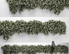 3D Hanging Plant - ChoisyaTernata - 7 Modular Pieces