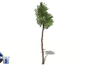 White Cedar Tree Low-Poly 3D Model low-poly