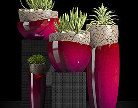 PLANTS SET 3D