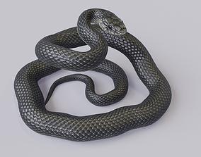 3D asset Black Mamba Rigged