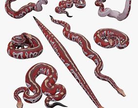 Blood Python - 3D Mesh VR / AR ready