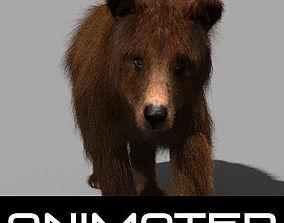 3D animated Wild Bear model animated