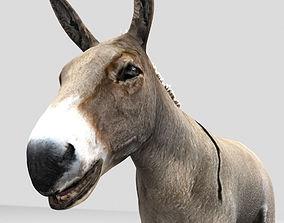 animated Donkey 3D Mode