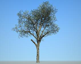 3D model Broadleaf 002
