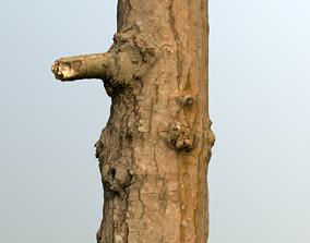 Thin oak tree trunk 3D model