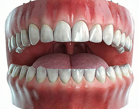 Realistic Human Mouth model 3D rigged