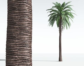 EVERYPlant Date Palm 12 --16 Models-- 3D