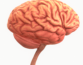 Human Brain 3D asset game-ready