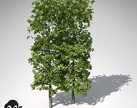 3D model XfrogPlants European Hornbeam Hedges