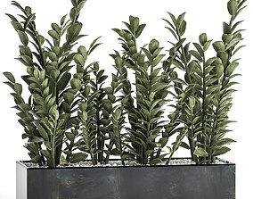 Zamioculcas in a flowerpot for the interior 874 3D model