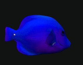 Cheek Butterfly Fish Blue 3D asset