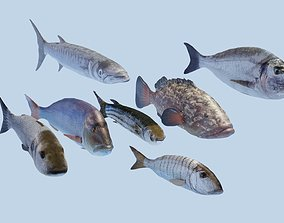 Collection of 7 photorealistic fishes animated 3D asset