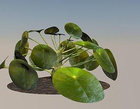 Plant elephantear Chinese money plant 3D asset