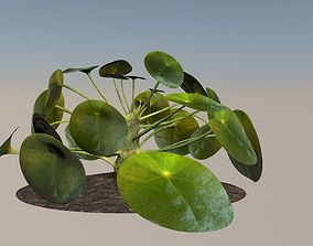 Plant elephantear Chinese money plant 3D asset
