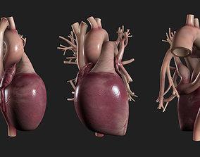 3D model low-poly Human Heart