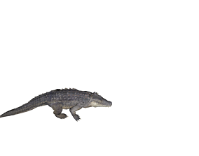 3D asset alligator