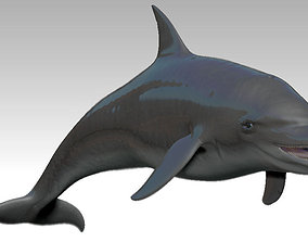 Rigged dolphin 3D asset