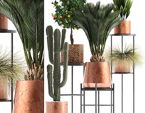 Collection of plants in copper pots 3D