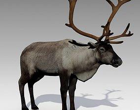 Reindeer Animated 3D asset