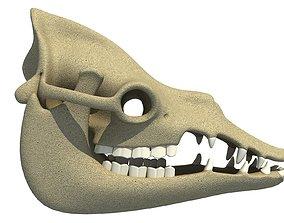 Bones Camel Skull 3D model