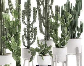 Decorative cactus in white pots for the interior 571 3D