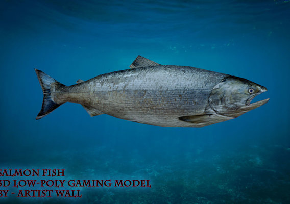 Salmon Fish Lowpoly 3D Gaming model Low-poly 3D model