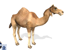 Camel Rigged Animated Lowpoly 3d model animated