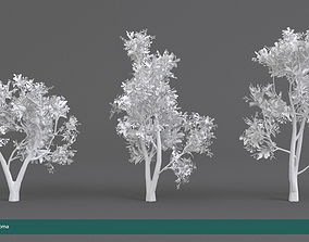 3D model Arbutus tree LOW POLY very detailed