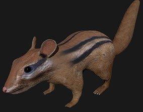 3D asset Chipmunk Indian Squirrel